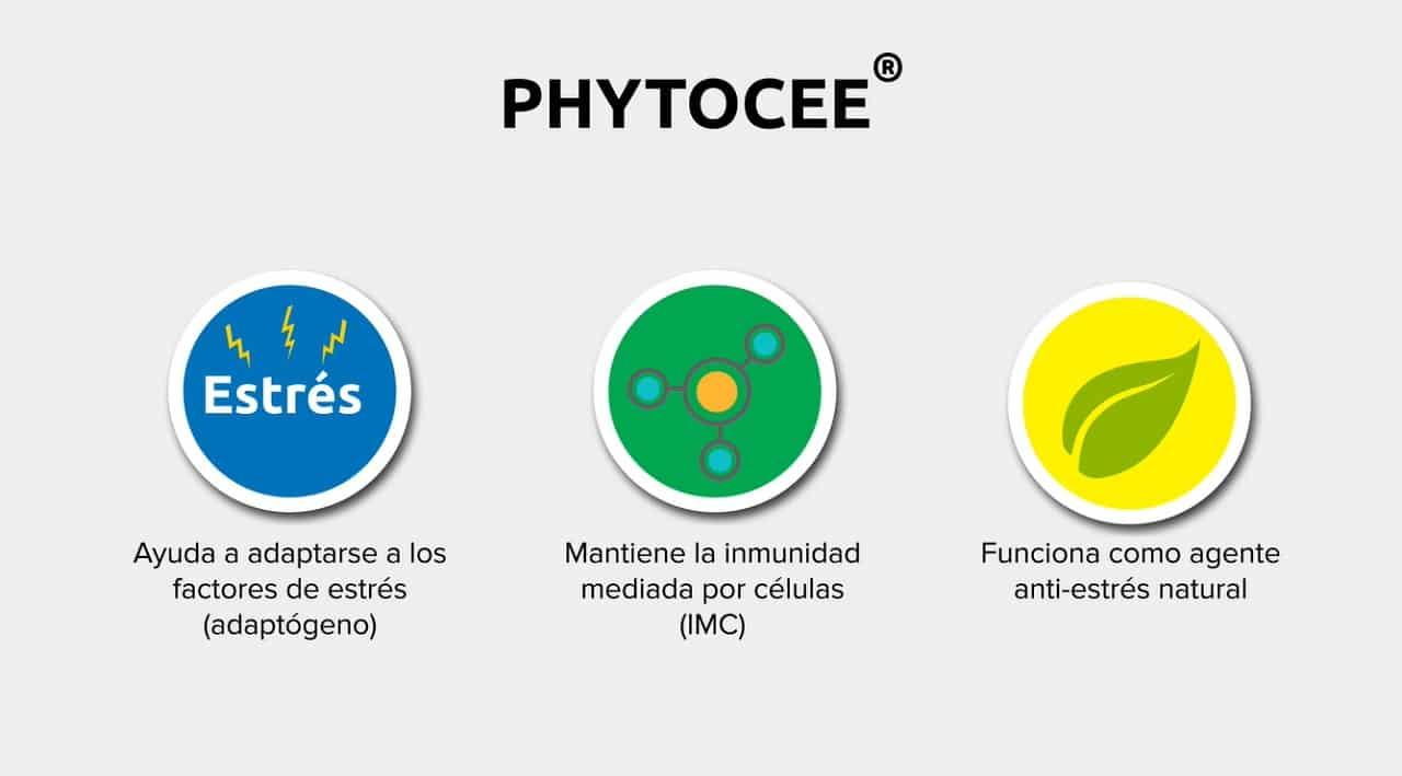 Phyrocee