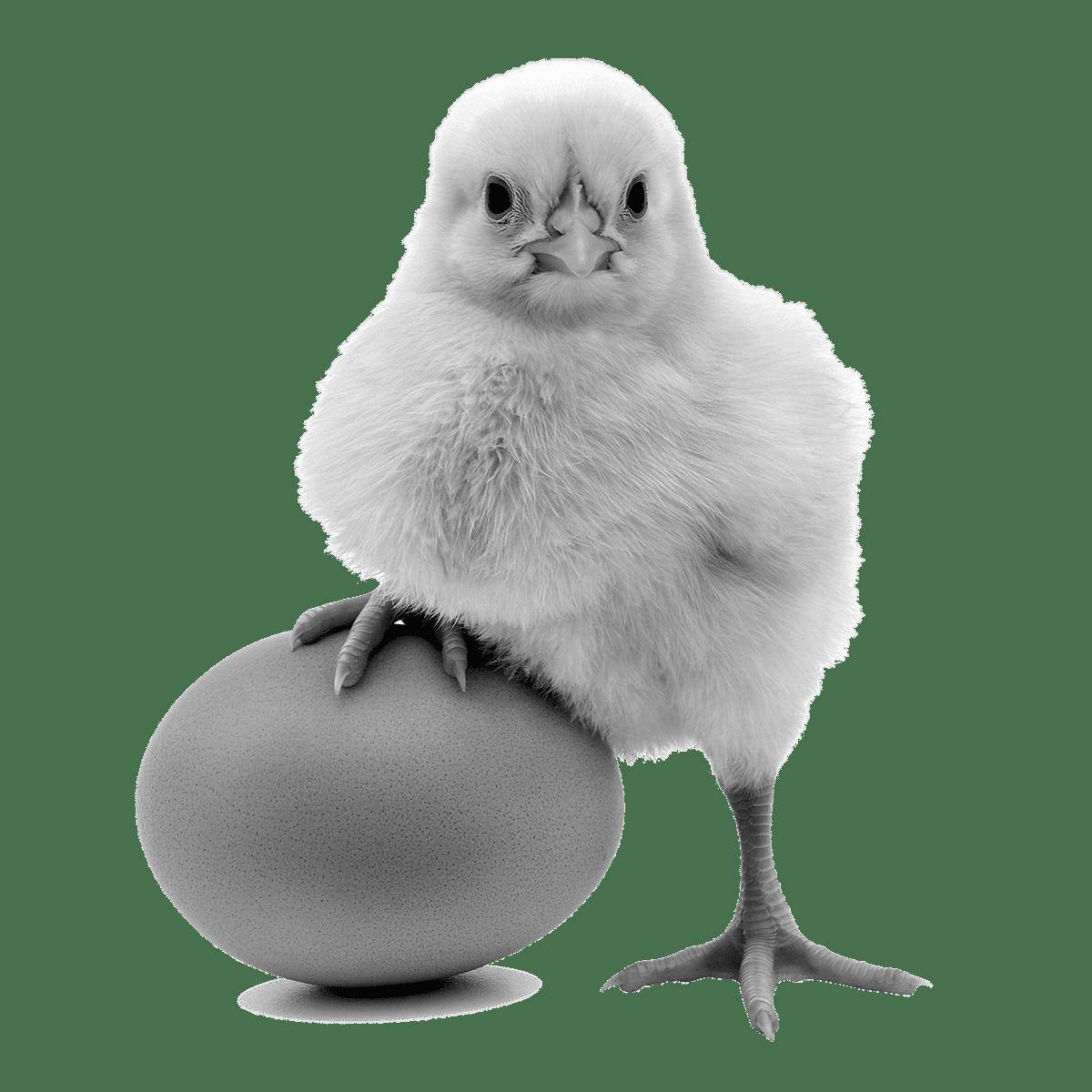 Aves Addera